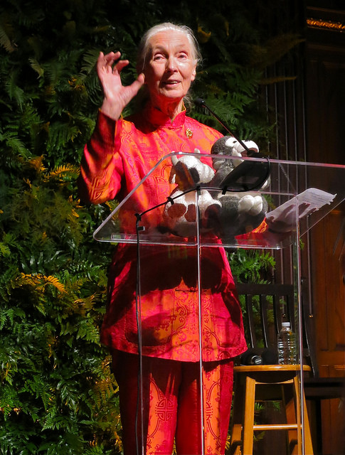 Dr. Jane Goodall's 80th Birthday, by Steve Jurvetson