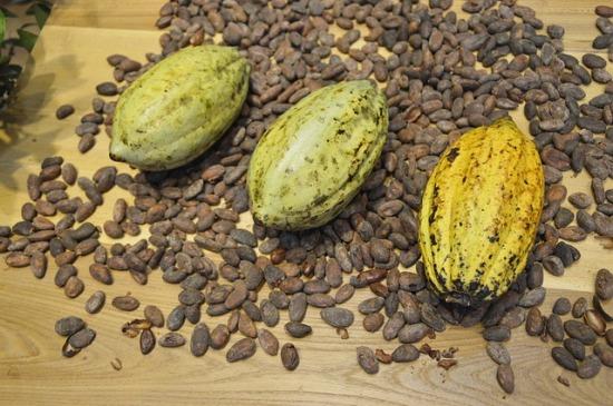 cocoa-beans-373813_640.jpg