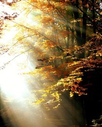 forest-411491_640.jpg
