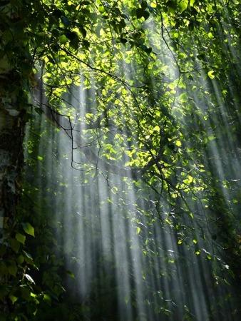 forest-56930_640.jpg