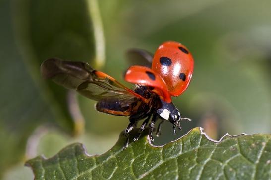 ladybug-743562_640.jpg