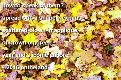 my-leaves-poem