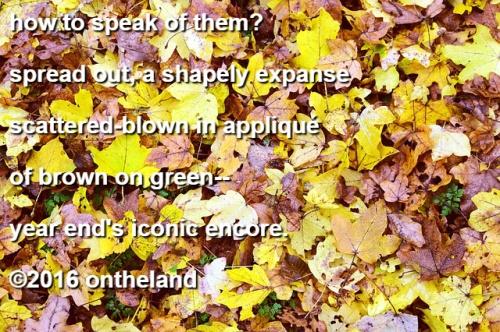 my-leaves-poem