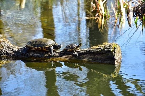 turtle-1288555_640.jpg