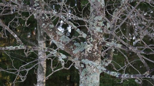 lichen-262816_640.jpg